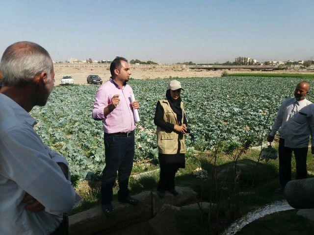 کلاس کشاورز در مزرعه با موضوع مبارزه بیولوژیک با بید کلم و عدم مصرف سموم شیمیایی