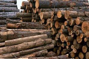 بیش از شش و نیم تن چوب قاچاق در فلاورجان کشف و ضبط شد.