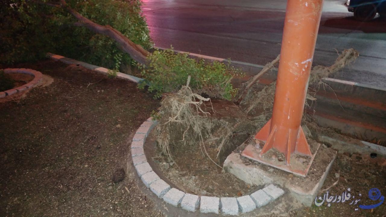 شکستن درخت در فلاورجان / این حادثه خسارتی نداشت