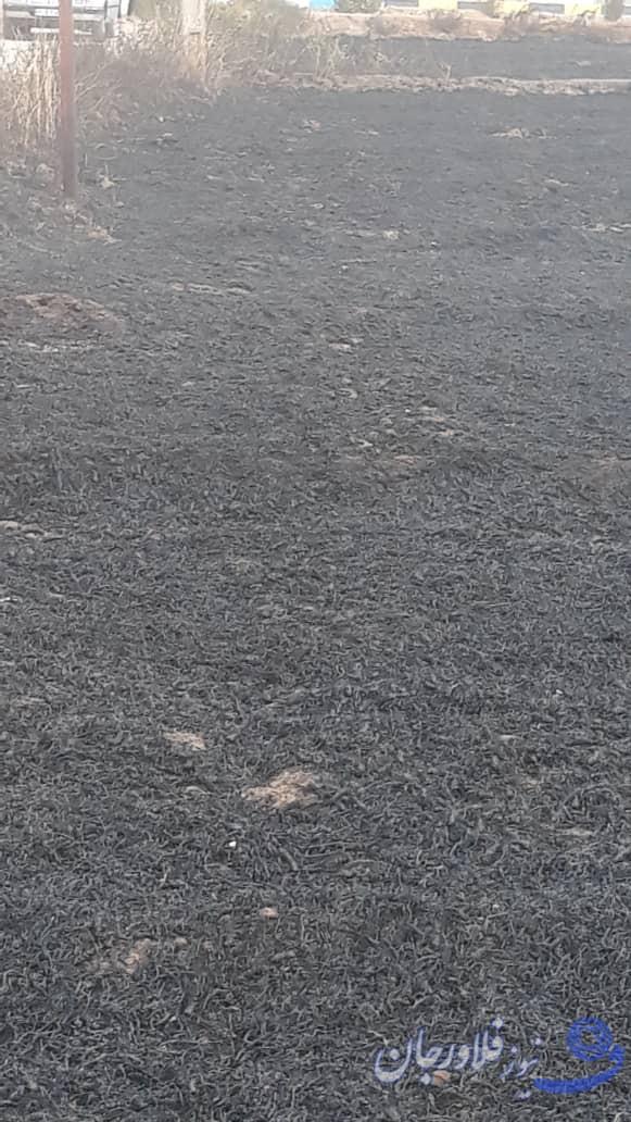 آتشسوزی در یک هکتار از مزارع گندم روستای جولرستان/ مهار آتش توسط نیروهای محلی باحداقل امکانات