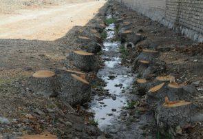 قطع ۲۰۰ اصله درخت در خیابان شهید نواب صفوی+تصاویر