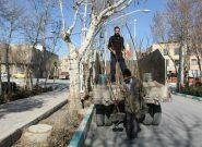 گزارش تصویری/ کاشت نهال در شهر فلاورجان  به بهانه روز درختکاری