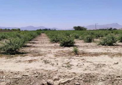 اجرای آبیاری قطره ای در ۶ هکتار از اراضی کشاورزی قهدریجان