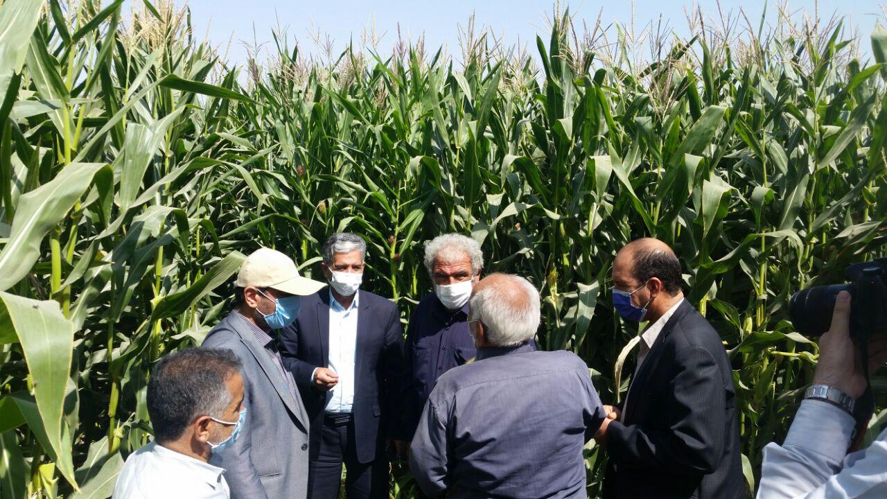 کشاورزان غرب اصفهان با مدیریت حجم محدود آب، بیشترین بهرهوری را بدست آوردند