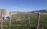 خسارت طوفان به گلخانهها در شهرستان فلاورجان