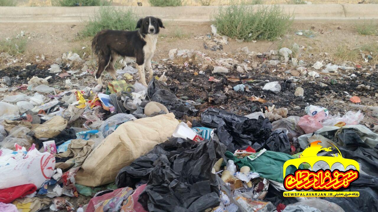 ریختن زباله در کنار خیابان در جاده زازران -جوجیل/قانون مجازات اسلامی و زبالهریزها
